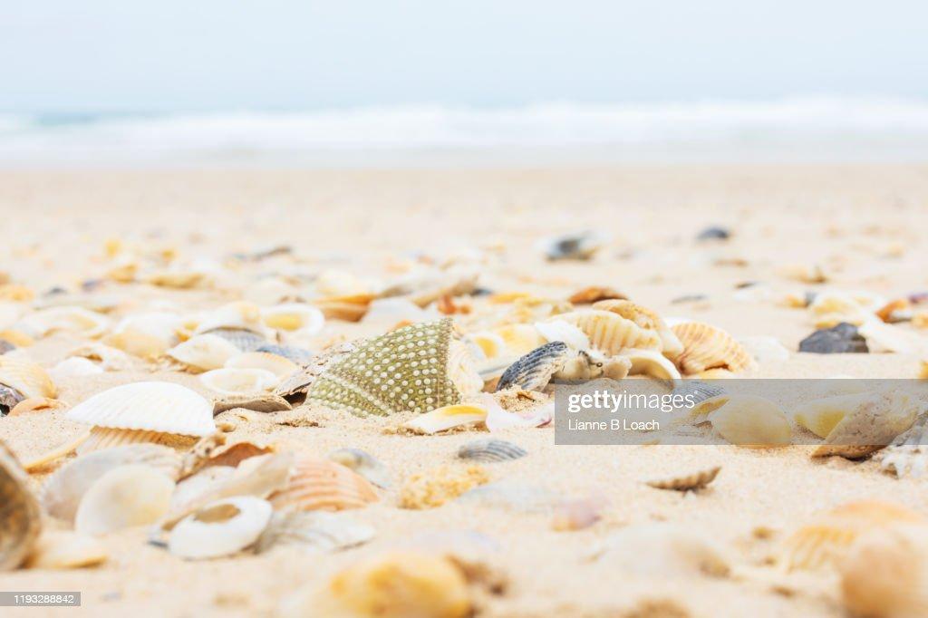 Seashells on the beach : Stock Photo