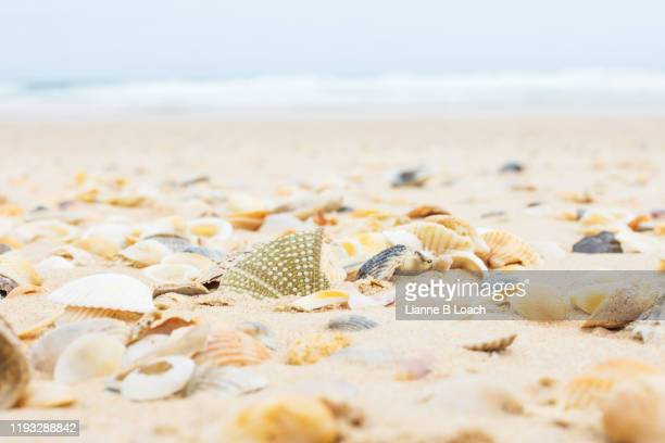 seashells on the beach - lianne loach stock pictures, royalty-free photos & images