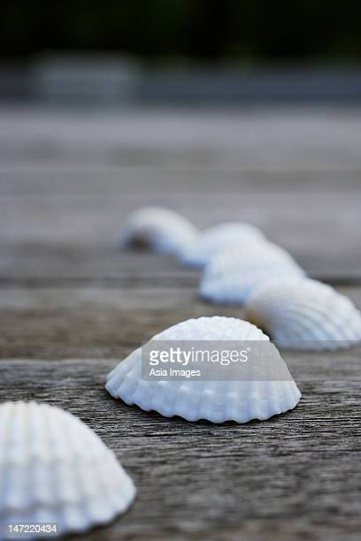 Seashells on wooden decking