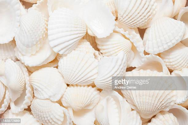 seashells - andrew dernie stock pictures, royalty-free photos & images