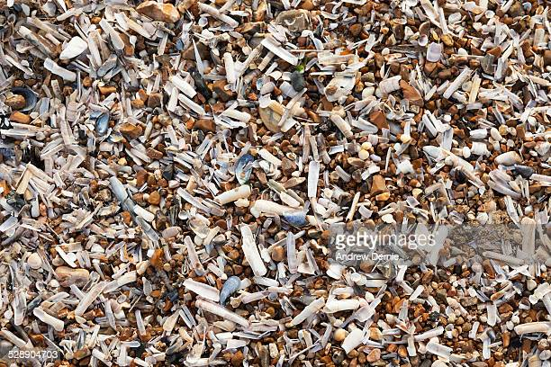 seashells - andrew dernie stockfoto's en -beelden