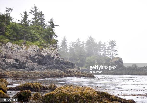 kust aan de westkust van vancouver island - vancouver island stockfoto's en -beelden