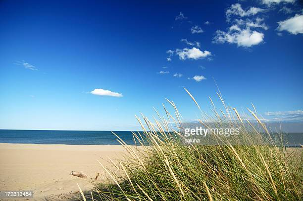 Seaside grass with cumulus clouds and blue sky