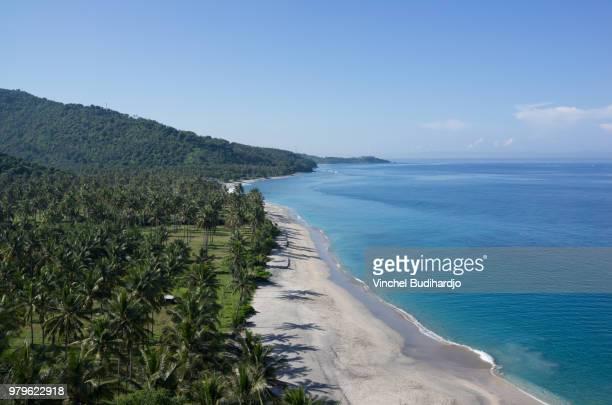 seaside landscape with palm trees on sunny day, lombok, west nusa tenggara, indonesia - lombok fotografías e imágenes de stock