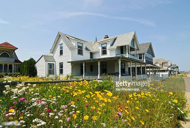 seaside wildflowers - martha's_vineyard stock pictures, royalty-free photos & images
