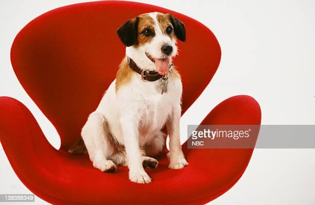 Enzo the Dog as Eddie