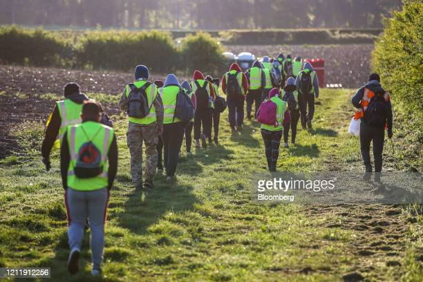 Seasonal foreign farm workers arrive to harvest asparagus at Woodhouse Farm, a unit of Sandfield Farms Ltd., in Hurcott, U.K., on Tuesday, May 5,...