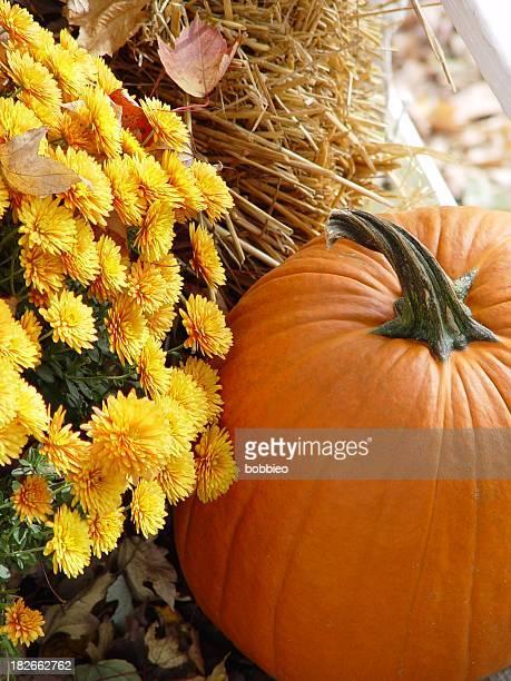 季節限定-Harvestfest