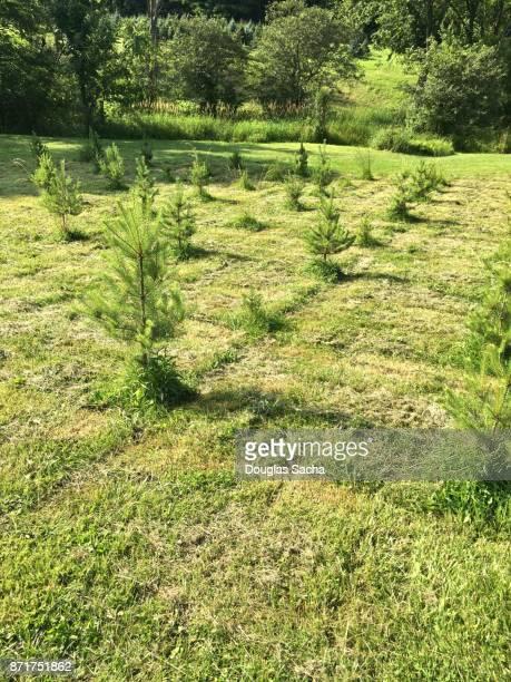 Seasonal Holiday tree Farm