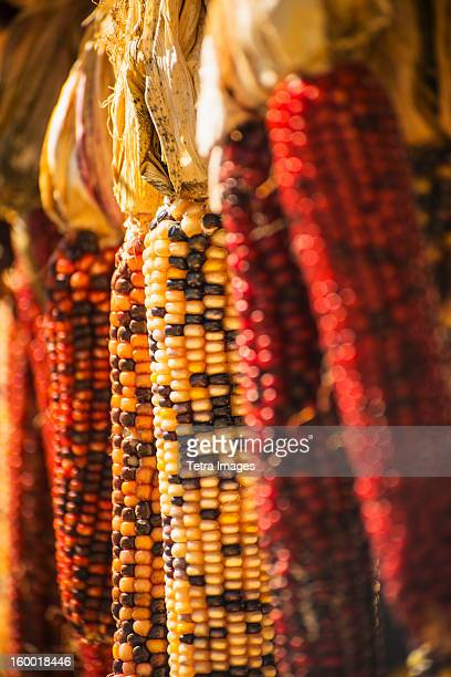 seasonal indian corn - indian corn stock photos and pictures