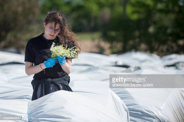 A seasonal worker takes part in a harvest of Lily of the Valley in Saint PhilbertdeGrandLieu near Nantes on April 14 on the twentyninth day of a...