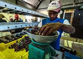 klawer south africa seasonal workers package