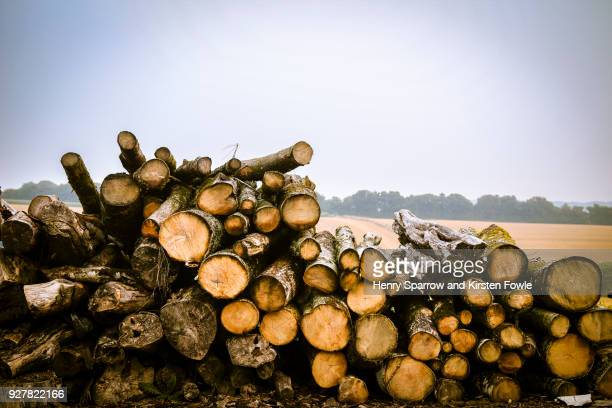 seasoning firewood - fallen tree stock pictures, royalty-free photos & images