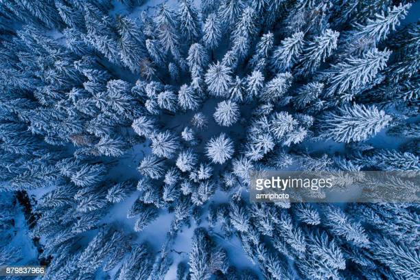 4 Seasons - aerial shot directly above winter forest