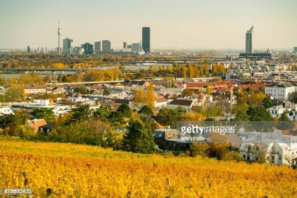 4 Seasons - autumn in vineyards of vienna