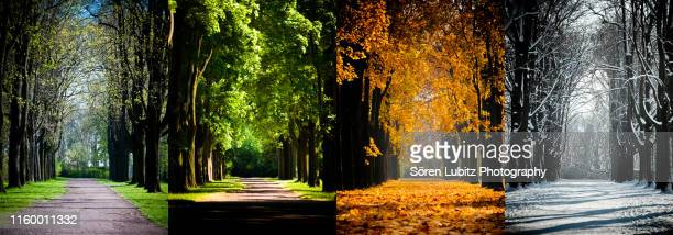 4 seasons in a park - season stock pictures, royalty-free photos & images