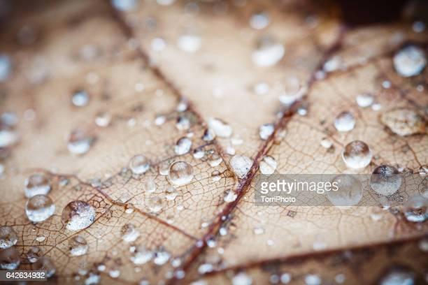 4 Seasons - Raindrops on autumn leaf