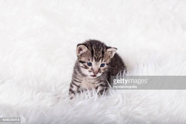 Seated cute kitty