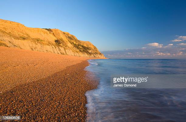 seatown beach near charmouth looking towards ridge cliff and east ebb in dorset, england. the stunning golden glow of the majestic sandstone cliffs, with the english channel rolling in at low tide. - seascape stock pictures, royalty-free photos & images
