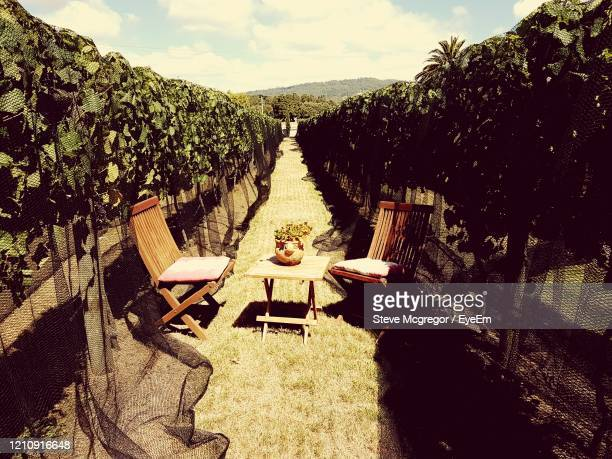 seats in a vineyard. - mcgregor stock pictures, royalty-free photos & images