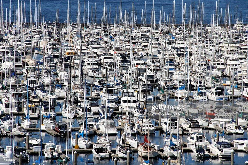 Seattle Marina filled with many boats : Stock Photo