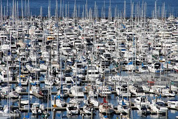 Seattle Marina filled with many boats