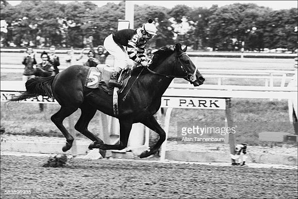 Seattle Slew wins the Belmont Stakes part of the Triple Crown Belmont New York June 11 1977