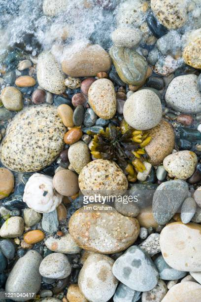 Seaweed and pebbles in pastel shades of colour forming curvy shapes on the seashore on Isle of Arran, Scotland.