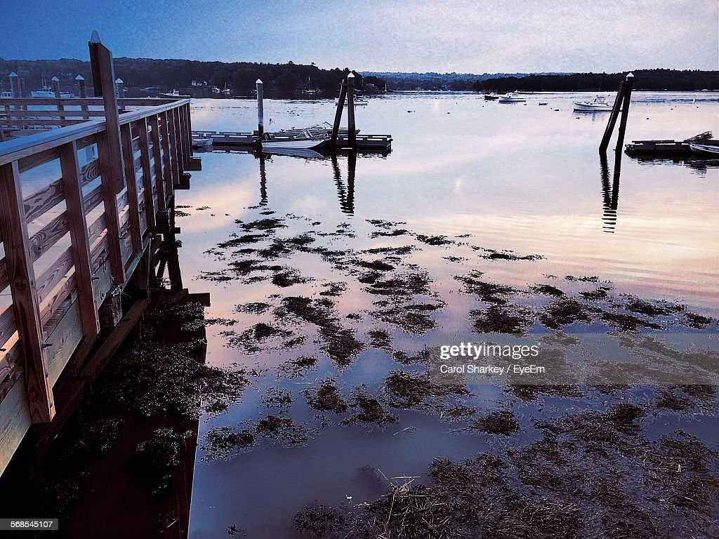 Seaweed At Shore During Sunset : Stock Photo