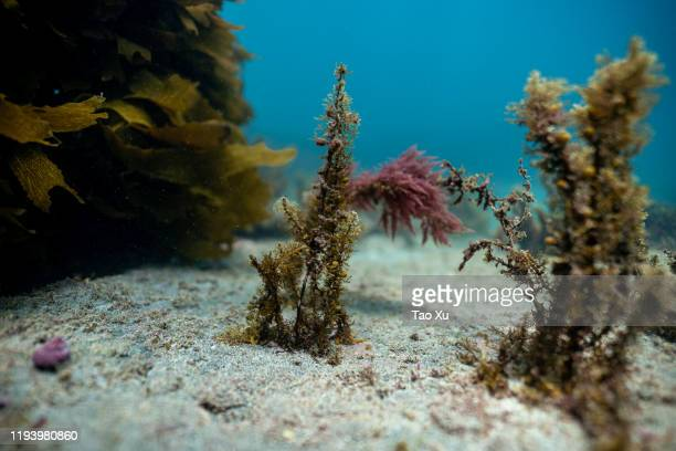 seaweed at the bottom of the ocean - at the bottom of stock pictures, royalty-free photos & images