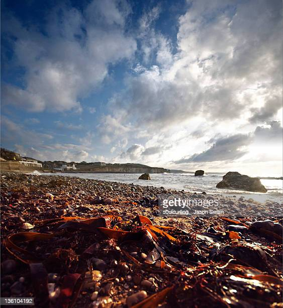 seaweed & cumulus. - s0ulsurfing photos et images de collection