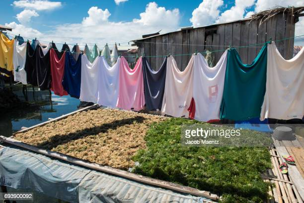 seaweed drying in a sama-bajau village, tawi-tawi, philippines - bajau stock pictures, royalty-free photos & images