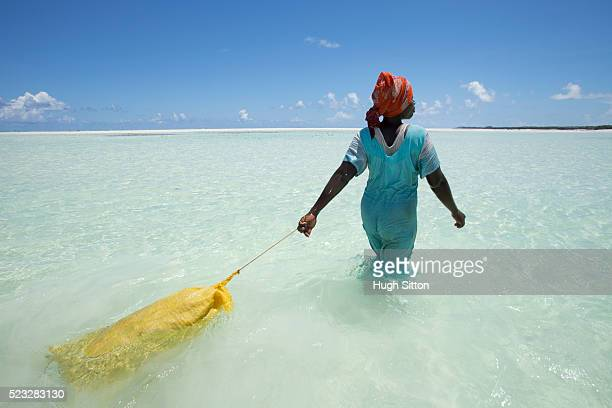 seaweed farming in zanzibar. tanzania. africa - hugh sitton stock pictures, royalty-free photos & images