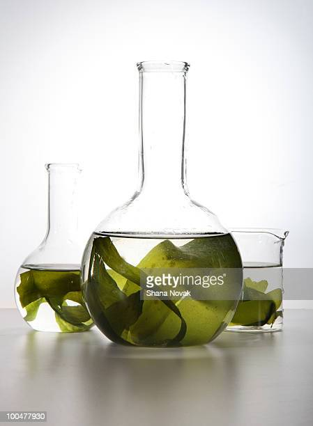 Seaweed Floating in Labglass