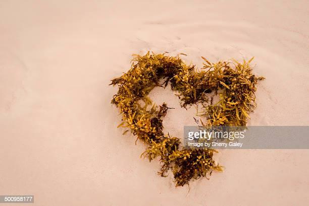 seaweed heart - ハーバー島 ストックフォトと画像