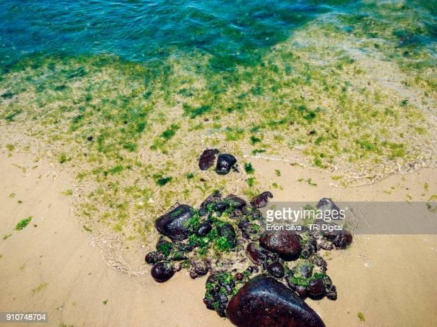 Seaweed in the Farol Beach