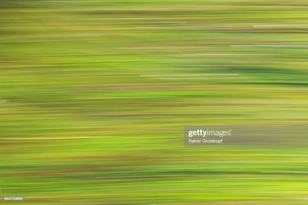 seaweed moving in Pacific ocean (blurred) : Stock-Foto