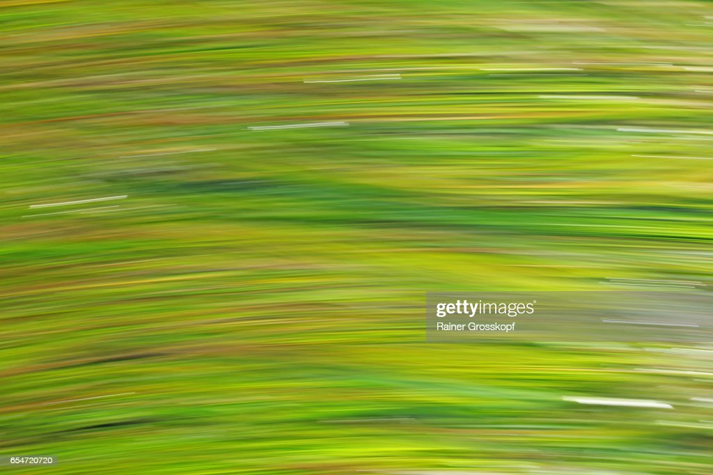 seaweed moving in Pacific ocean (blurred) : Stock-Foto