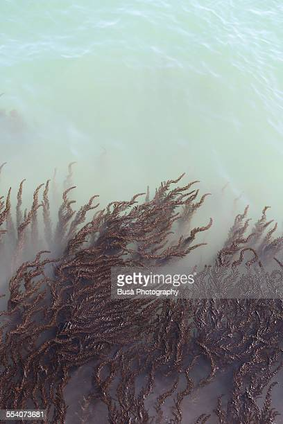 Seaweed pattern in murky, milky water