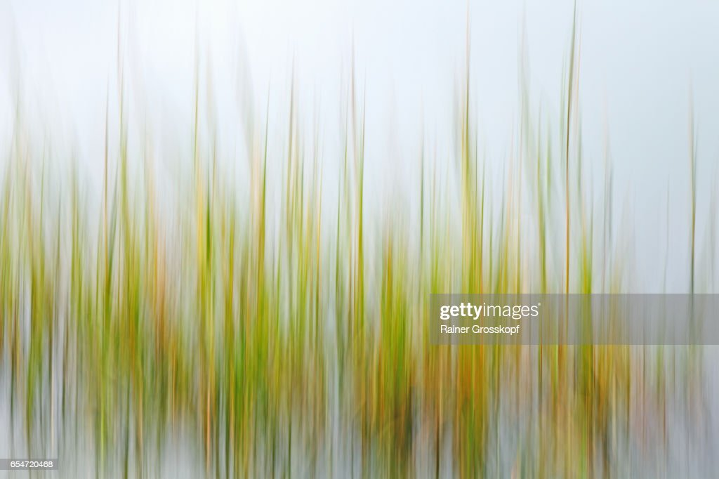 Seaweed (blurred) : Stock-Foto
