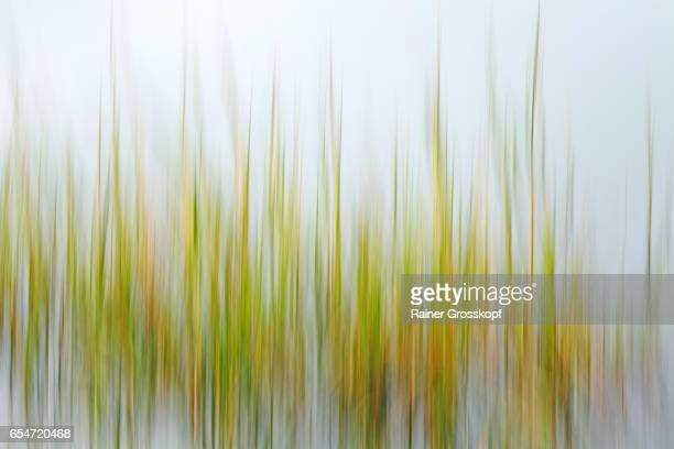 seaweed (blurred) - rainer grosskopf stock pictures, royalty-free photos & images