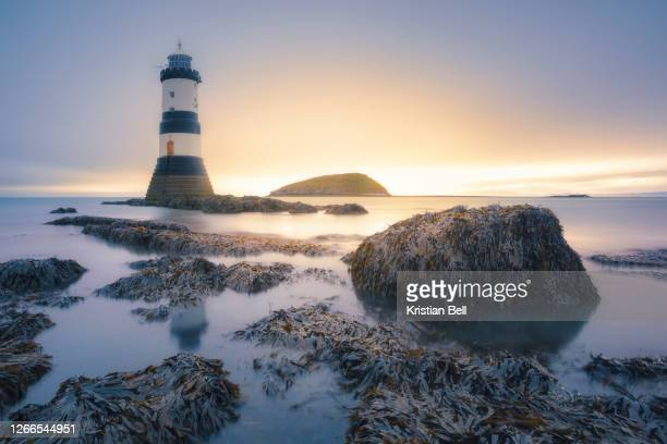 seaweed, rocks, lighthouse and an island at sunset in the uk - wave stock pictures, royalty-free photos & images