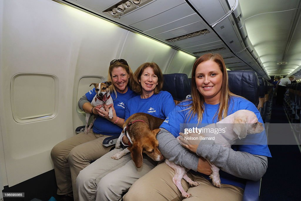 SeaWorld Rescue team members (L-R) Anita Yeattes, Suzanne Pelisson Beasley and Jessica Decoursey pose with rescue dogs onboard the Southwest Airlines flight. Sixty orphaned dogs and cats are being flown across the country from Newark Liberty International Airport on November 17, 2012 in Newark, New Jersey to make room for thousands of animals who need shelter as a result of Hurricane Sandy. SeaWorld's animal rescue team assists in the transport, which takes place aboard a donated Southwest Airlines flight. The pets are flying to the Helen Woodward Animal Center in San Diego, California, where they will be placed in loving homes with adoptive families.