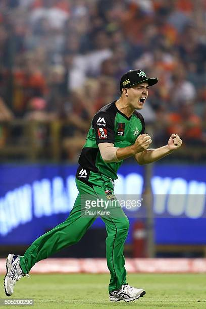 Seb Gotch of the Stars celebrates after taking a catch to dismiss Andrew Tye of the Scorchers during the Big Bash League match between the Perth...