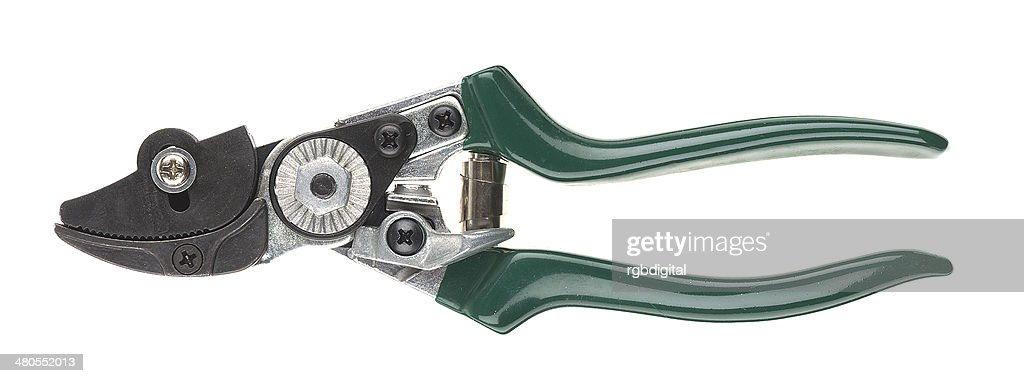 Secateurs : Foto de stock