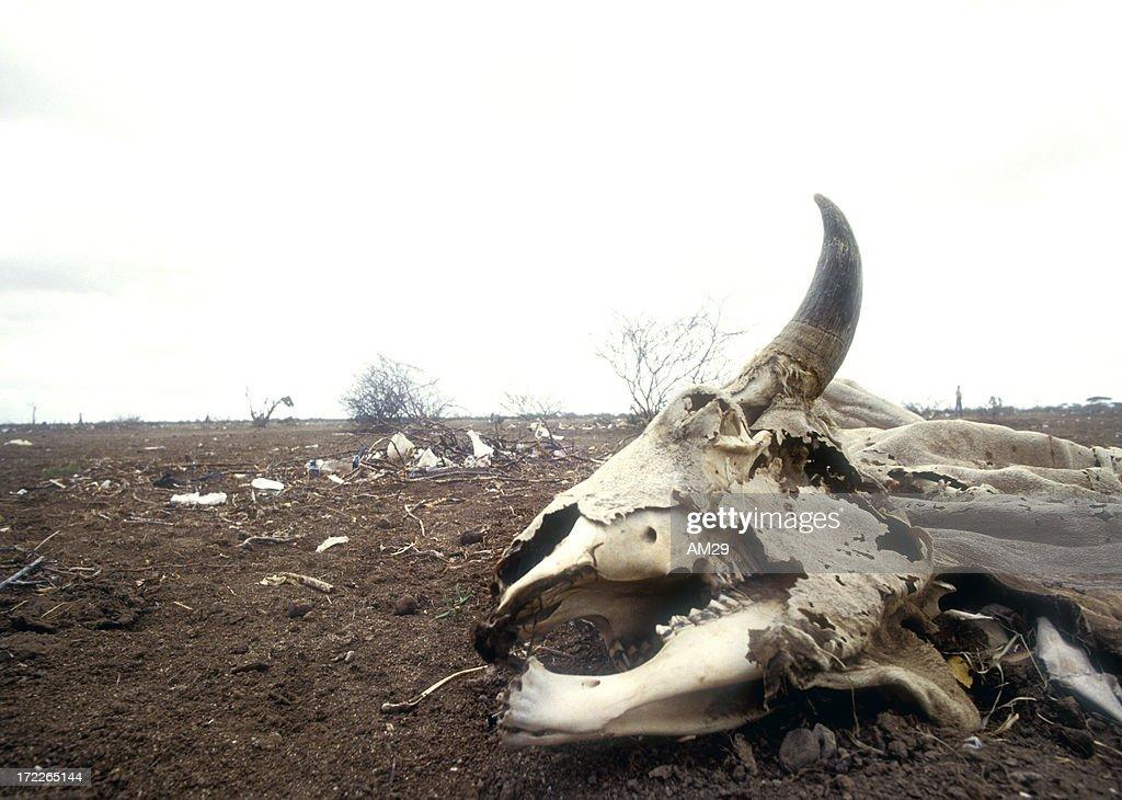 Secherres in Africa : Stock Photo