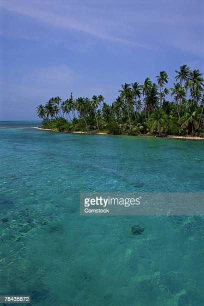 Secluded beach and palm trees at Glover's Reef , Atoll , Belize