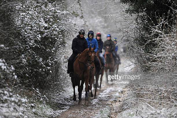Second lot make their way to the gallops after snowfall on January 14 2013 in Findon England