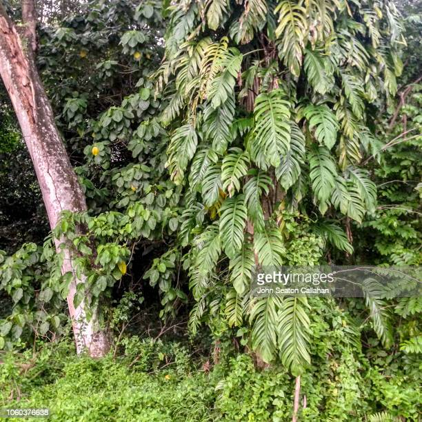 166 Tangled Vines Photos And Premium High Res Pictures Getty Images