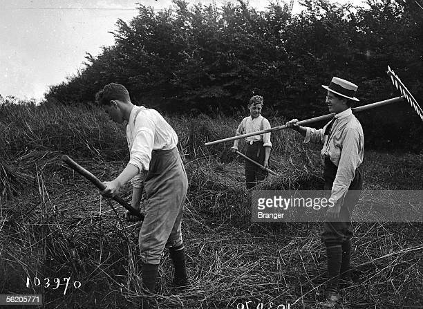 Secondary school students harvesting near Rambouillet 1916 France